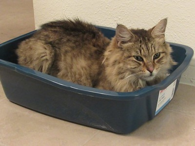 How To Dispose Of Used Cat Litter