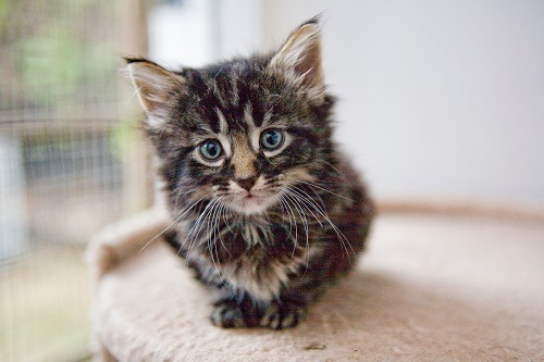 How Much Does A 3-Week Old Kitten Eat