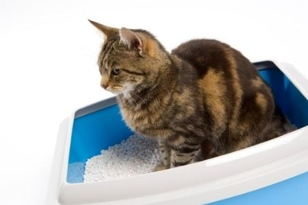 How Often Should You Replace Cat Litter