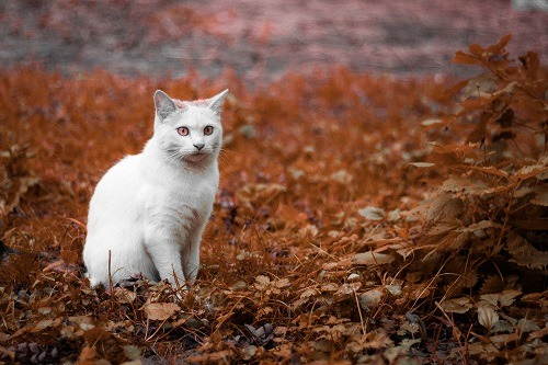 How To Stop Cats From Pooping In The Garden