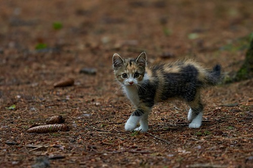 When Do Mother Cats Leave Their Kittens