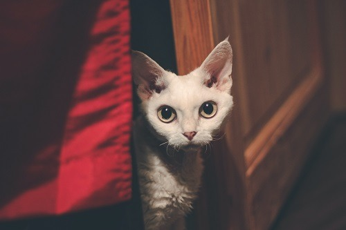 What to Do When My Cat Won't Come Out of Hiding